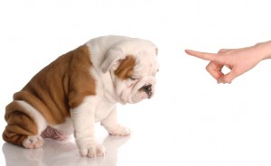 Free tips on housebreaking adult dogs and puppies